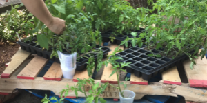 Planting the Seeds: Encouraging a Stronger Relationship & Ownership over Food Resources